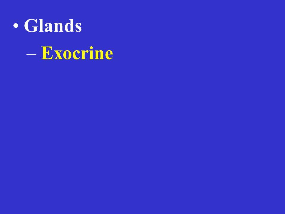 – Exocrine
