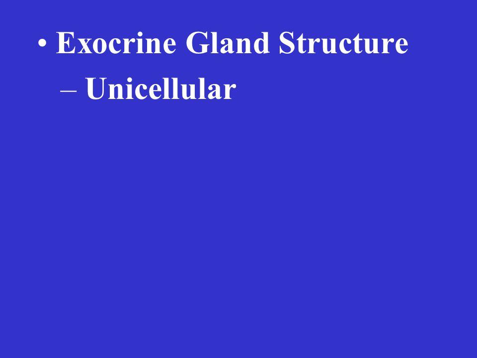 Exocrine Gland Structure – Unicellular