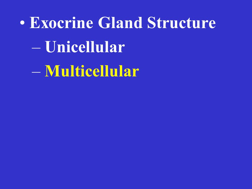 Exocrine Gland Structure – Unicellular – Multicellular