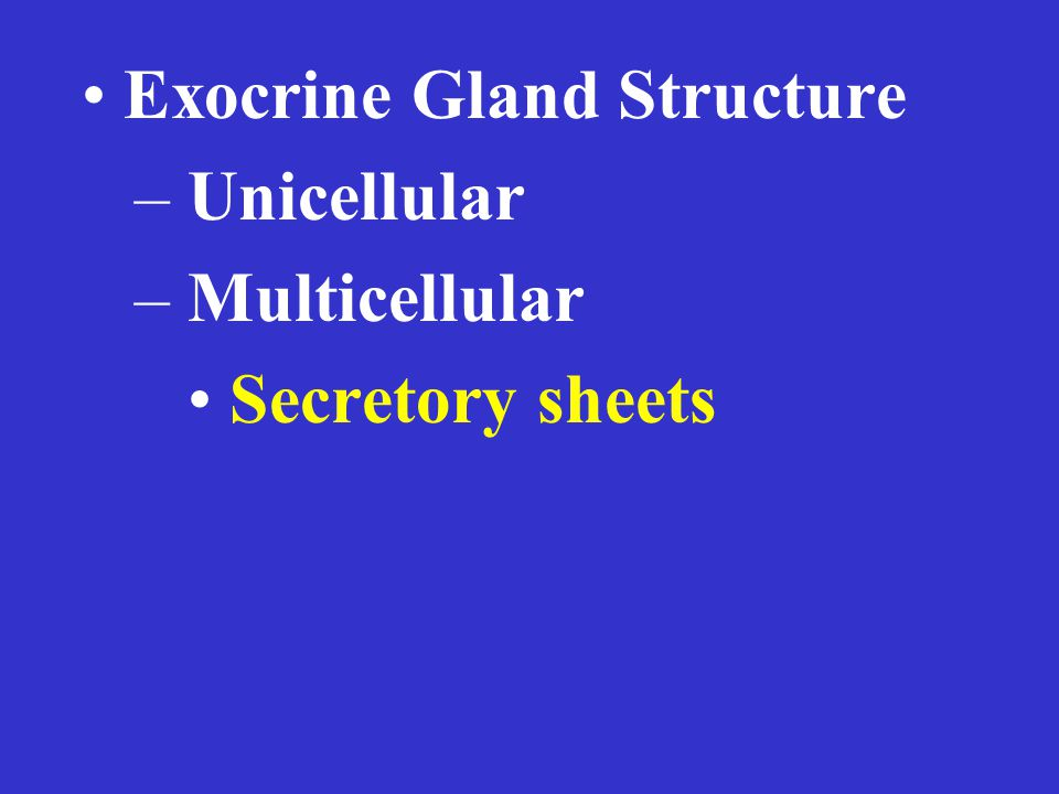 Exocrine Gland Structure – Unicellular – Multicellular Secretory sheets