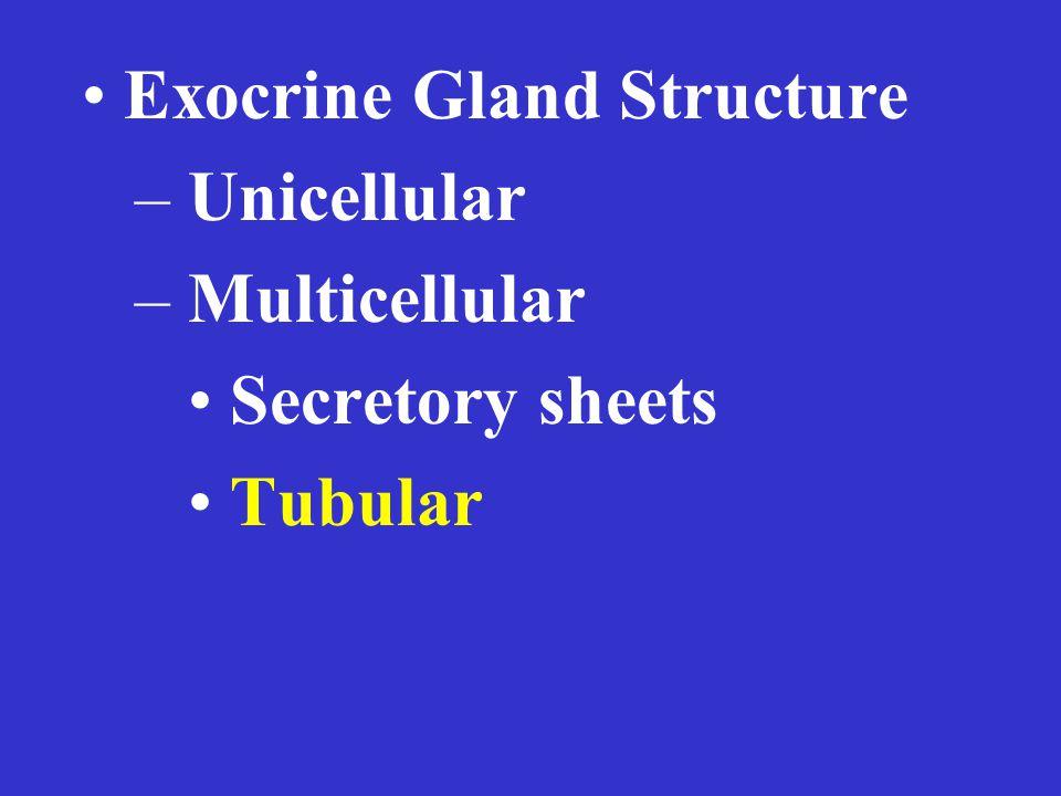 Exocrine Gland Structure – Unicellular – Multicellular Secretory sheets Tubular