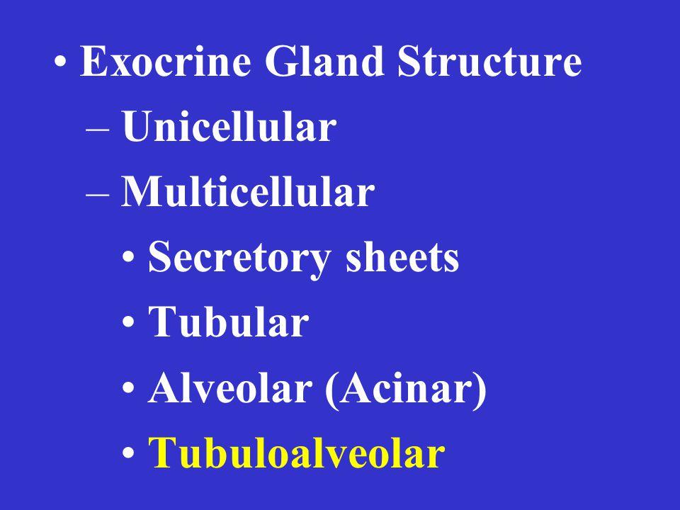 Exocrine Gland Structure – Unicellular – Multicellular Secretory sheets Tubular Alveolar (Acinar) Tubuloalveolar