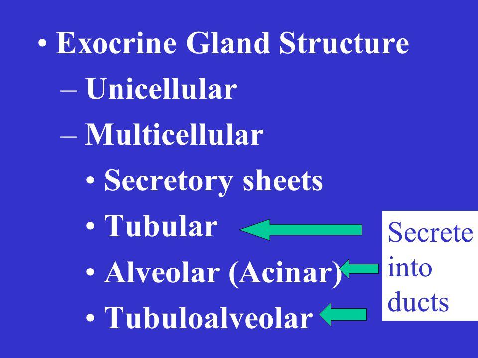 Exocrine Gland Structure – Unicellular – Multicellular Secretory sheets Tubular Alveolar (Acinar) Tubuloalveolar Secrete into ducts