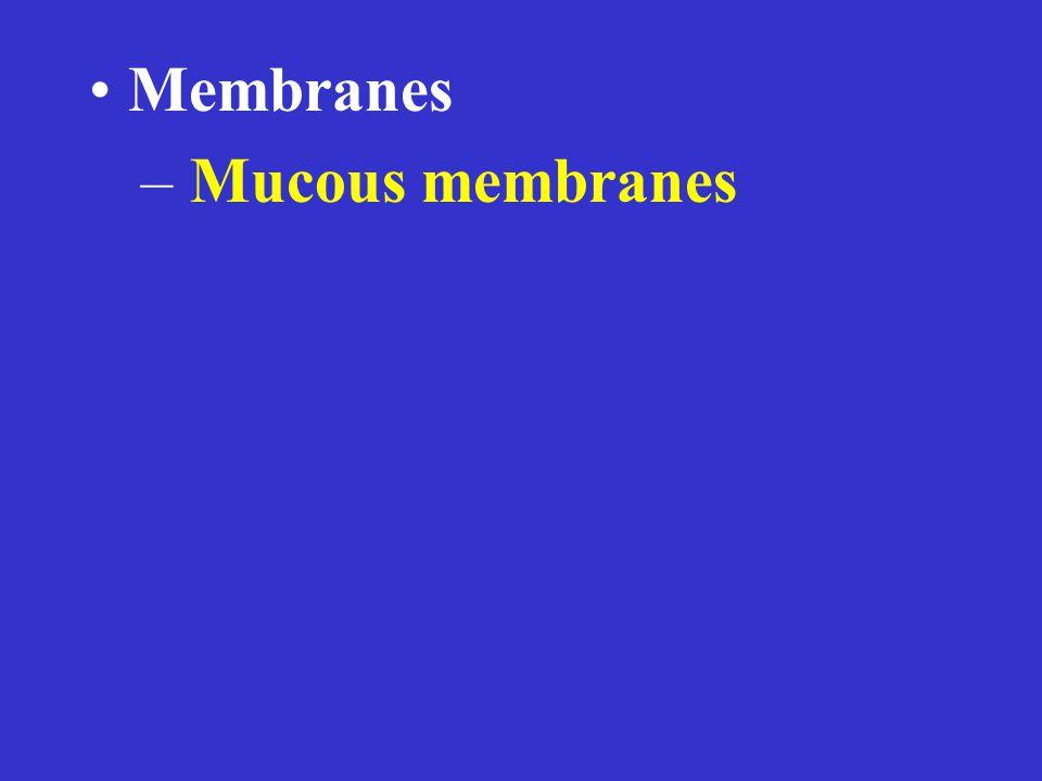 – Mucous membranes