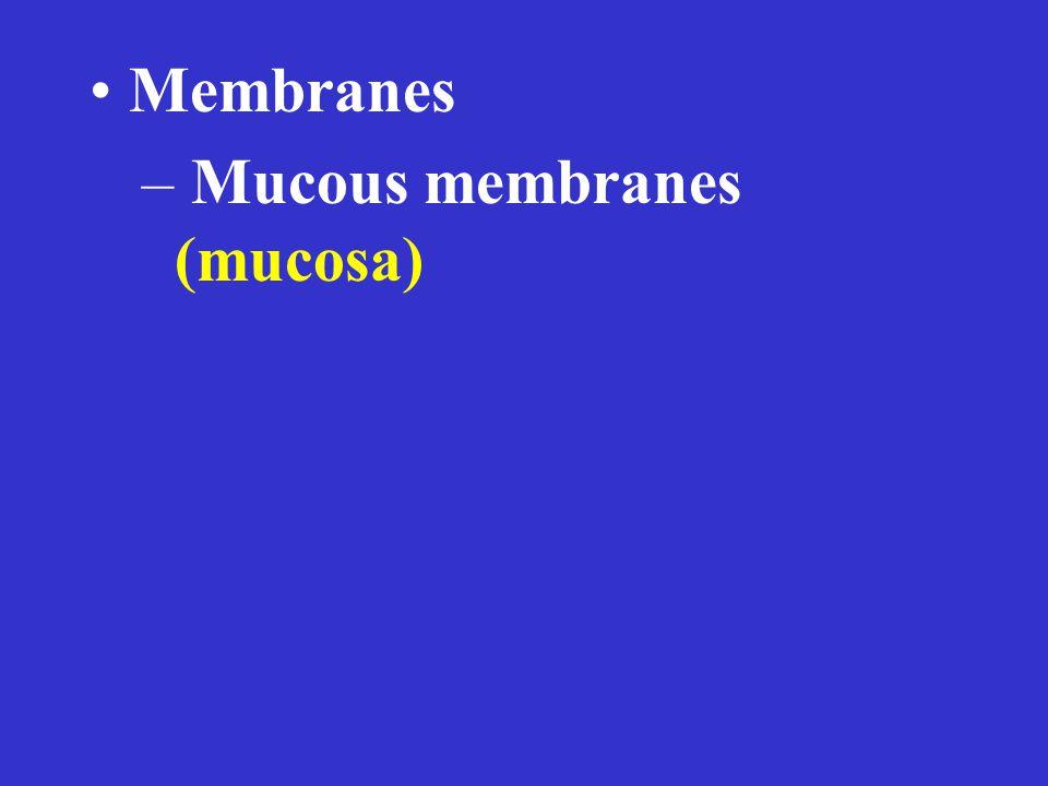 Membranes – Mucous membranes (mucosa)