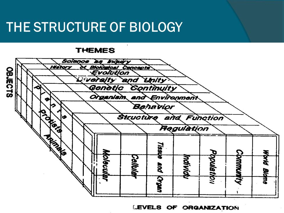 Biology Education  Objects: Learning Biology  Problem: How to learn biology easier, faster, and better  Application: Biology Instruction in schools  Products: Book, curriculum, lesson plan, assessment instrument, etc.