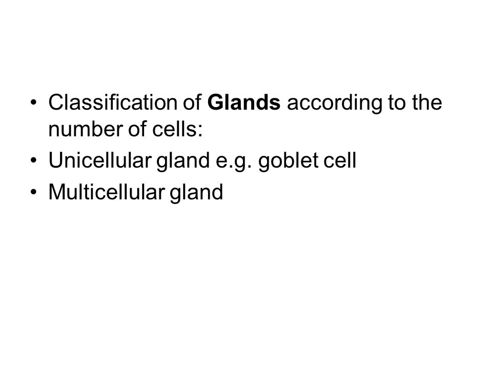 unicellular glands ( Goblet cells): In mammals, the only example of unicellular glands are goblet cells The name goblet refers to the cell s shape, narrow at the base and bulging apically.