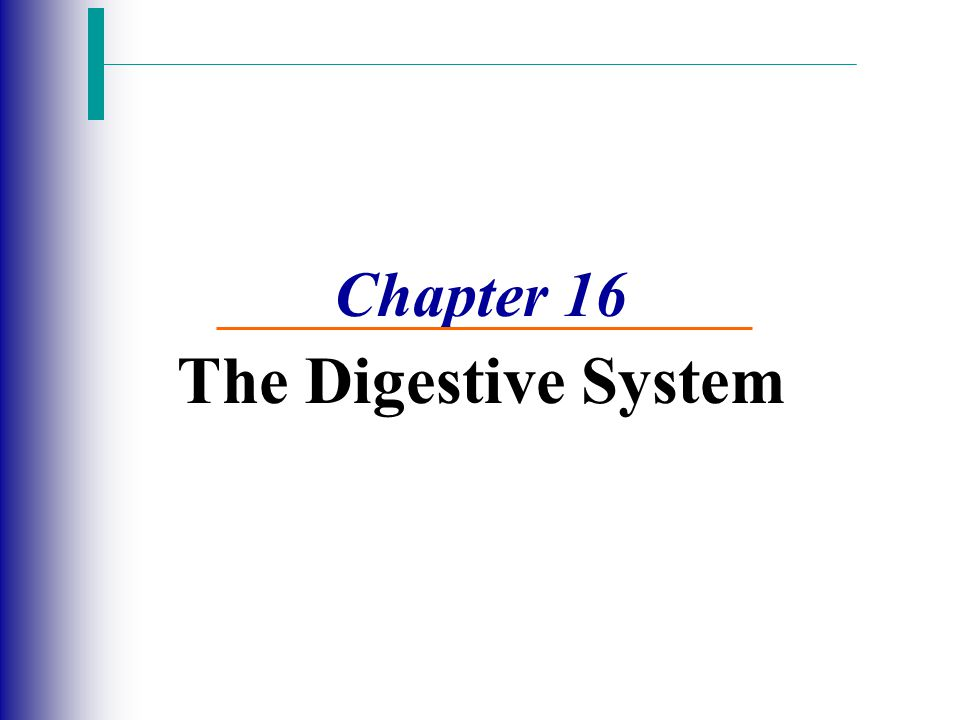 Functions of the Digestive System 1.take in food 2.break down food 3.absorb digested molecules 4.provide nutrients 5.eliminate wastes