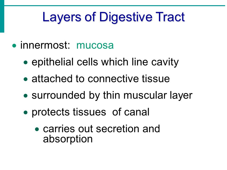 Layers of Digestive Tract  next: submucosa  thick layer of loose connective tissue housing blood vessels, lymph vessels, and nerves  nourishes surrounding layers of tract
