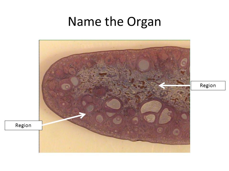 Name the Organ Region