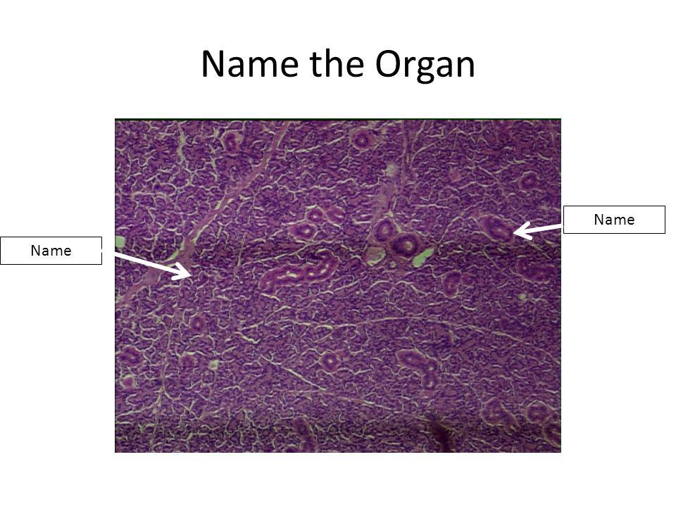 Name the Organ Name