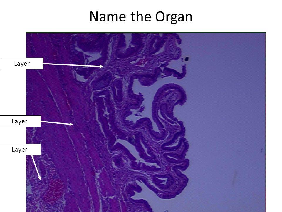 Name the Organ Layer