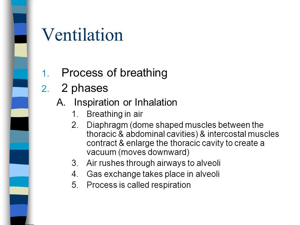 Ventilation 1.Process of breathing 2.