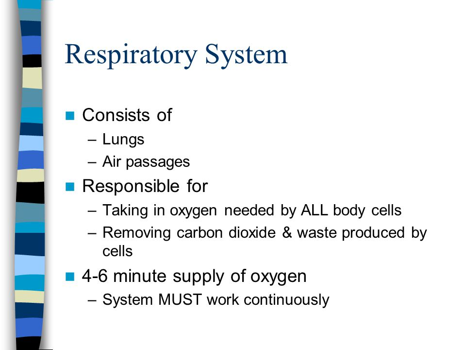 Consists of –Lungs –Air passages Responsible for –Taking in oxygen needed by ALL body cells –Removing carbon dioxide & waste produced by cells 4-6 minute supply of oxygen –System MUST work continuously