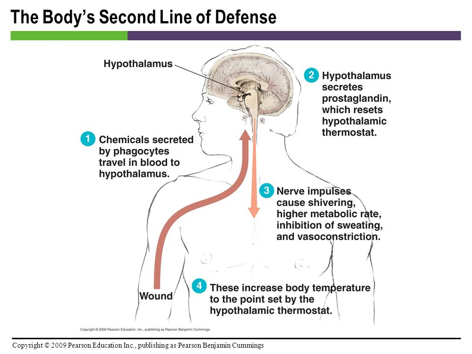 Copyright © 2009 Pearson Education Inc., publishing as Pearson Benjamin Cummings The Body's Second Line of Defense [INSERT FIGURE: 15.18]