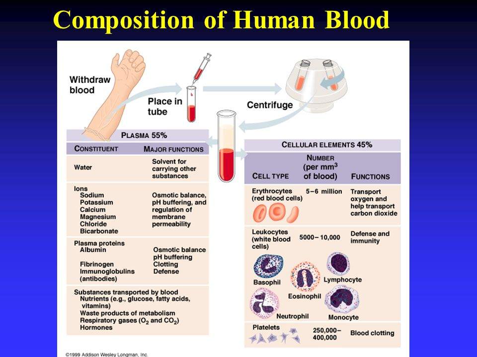 Composition of Human Blood