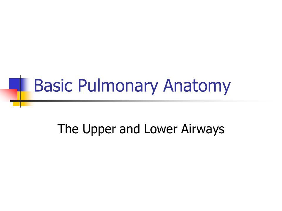 Basic Pulmonary Anatomy The Upper and Lower Airways