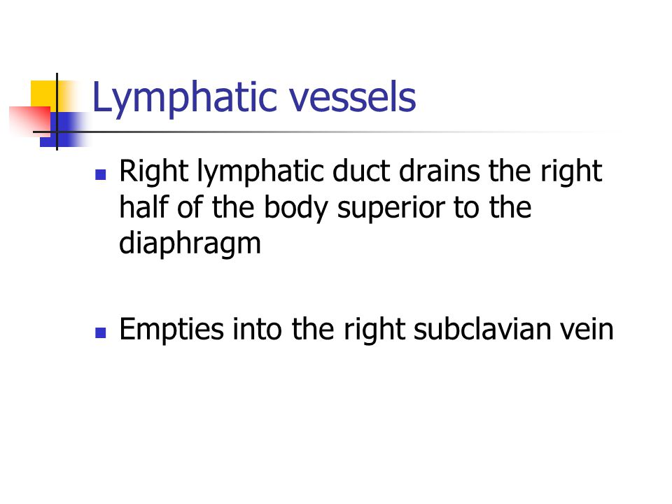 Lymphatic vessels Right lymphatic duct drains the right half of the body superior to the diaphragm Empties into the right subclavian vein