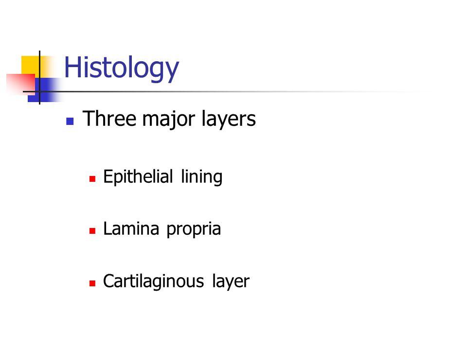 Histology Three major layers Epithelial lining Lamina propria Cartilaginous layer