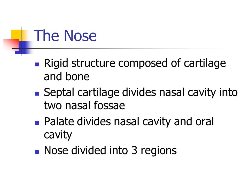 +Pharaynx (Throat), hollow, upper portion of the airway and the digestive tract Subdivided into: nasopharynx, oropharynx, laryngopharynx Nasopharynx Pseudostratified ciliated columnar epithelium