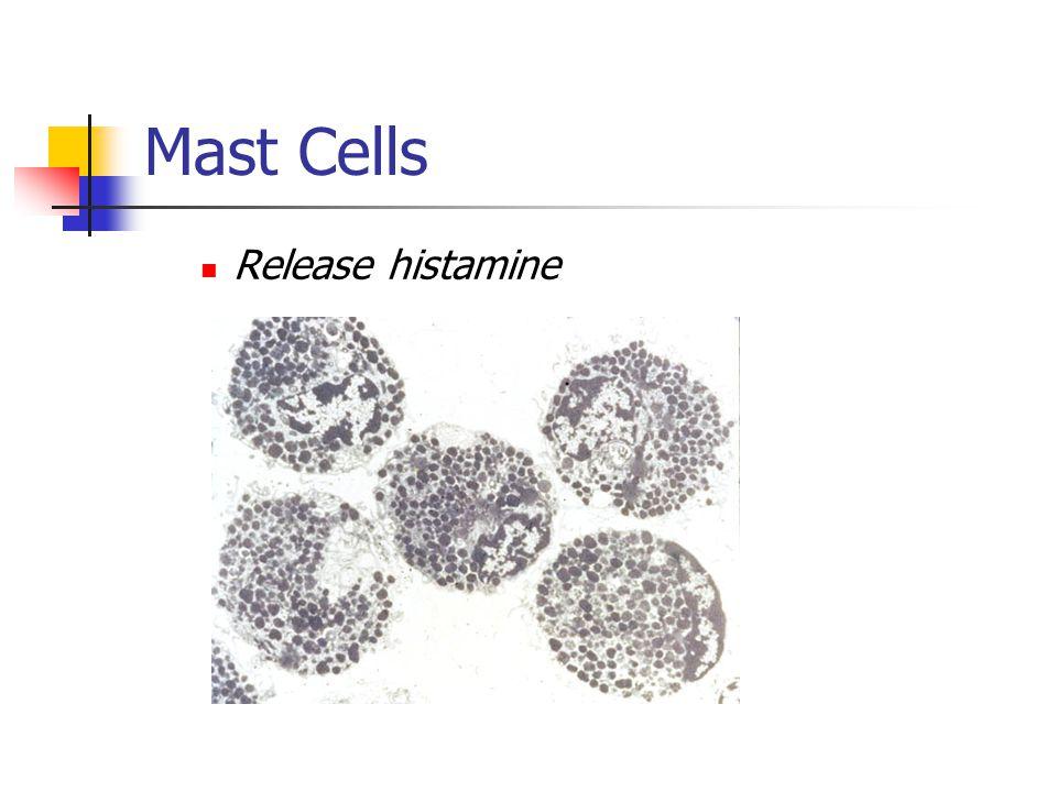 Mast Cells Release histamine