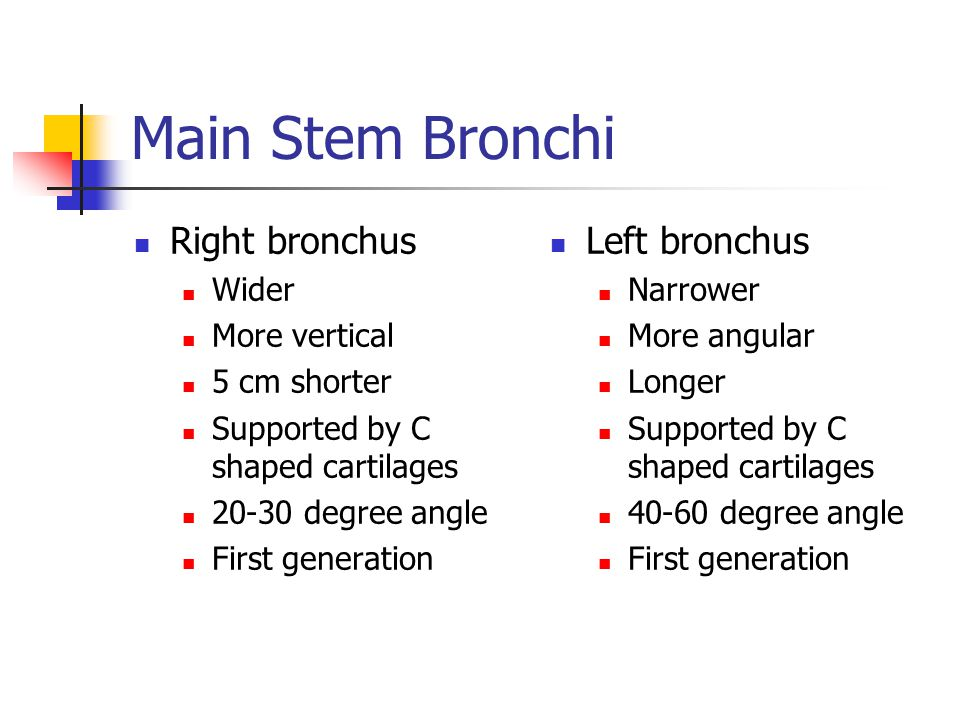 Main Stem Bronchi Right bronchus Wider More vertical 5 cm shorter Supported by C shaped cartilages 20-30 degree angle First generation Left bronchus N