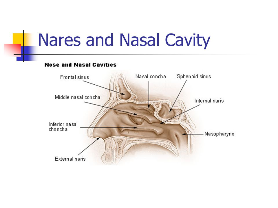 Nasopharynx Filters bacteria and foreign particles from inspired air Carries this to the stomach Eustachian tube and auditory tube open into lateral surfaces, connect nasopharynx to middle each, equalizes pressure of middle ear