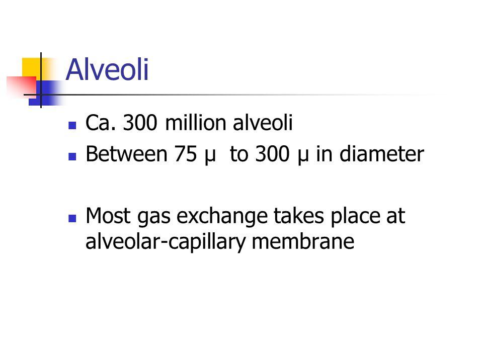 Alveoli Ca. 300 million alveoli Between 75 µ to 300 µ in diameter Most gas exchange takes place at alveolar-capillary membrane