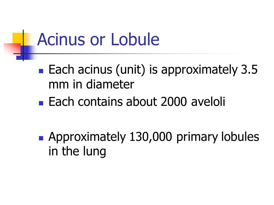 Acinus or Lobule Each acinus (unit) is approximately 3.5 mm in diameter Each contains about 2000 aveloli Approximately 130,000 primary lobules in the
