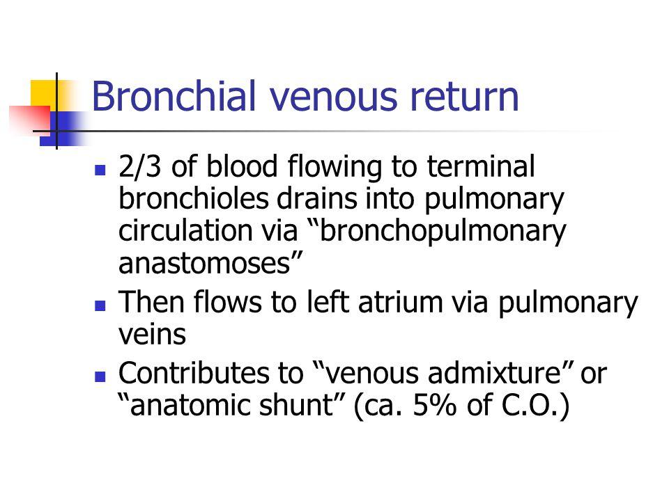 "Bronchial venous return 2/3 of blood flowing to terminal bronchioles drains into pulmonary circulation via ""bronchopulmonary anastomoses"" Then flows t"
