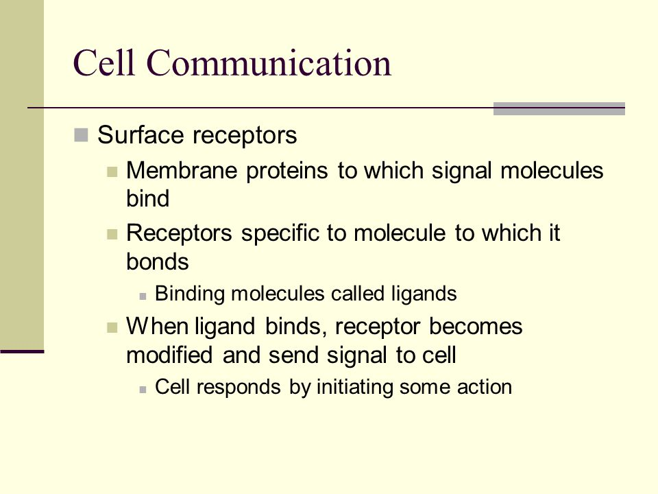 Surface receptors Membrane proteins to which signal molecules bind Receptors specific to molecule to which it bonds Binding molecules called ligands W
