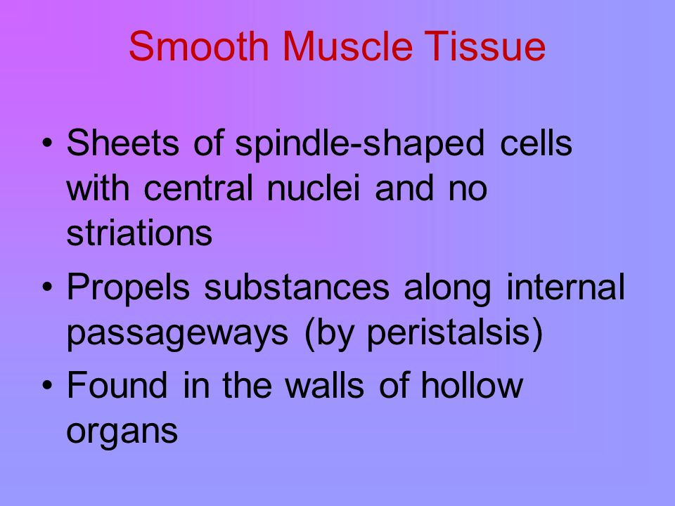 Smooth Muscle Tissue Sheets of spindle-shaped cells with central nuclei and no striations Propels substances along internal passageways (by peristalsis) Found in the walls of hollow organs