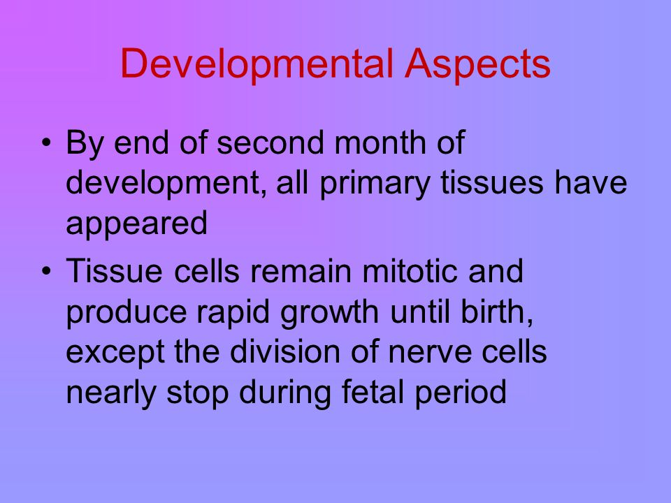 Developmental Aspects By end of second month of development, all primary tissues have appeared Tissue cells remain mitotic and produce rapid growth until birth, except the division of nerve cells nearly stop during fetal period