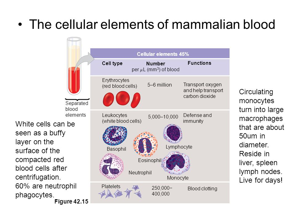 Inflammatory Response In local inflammation, histamine and other chemicals released from injured mast cells –dilate blood vessels making them leaky causing more fluid, more phagocytes, and antimicrobial proteins to enter the interstitial spaces.