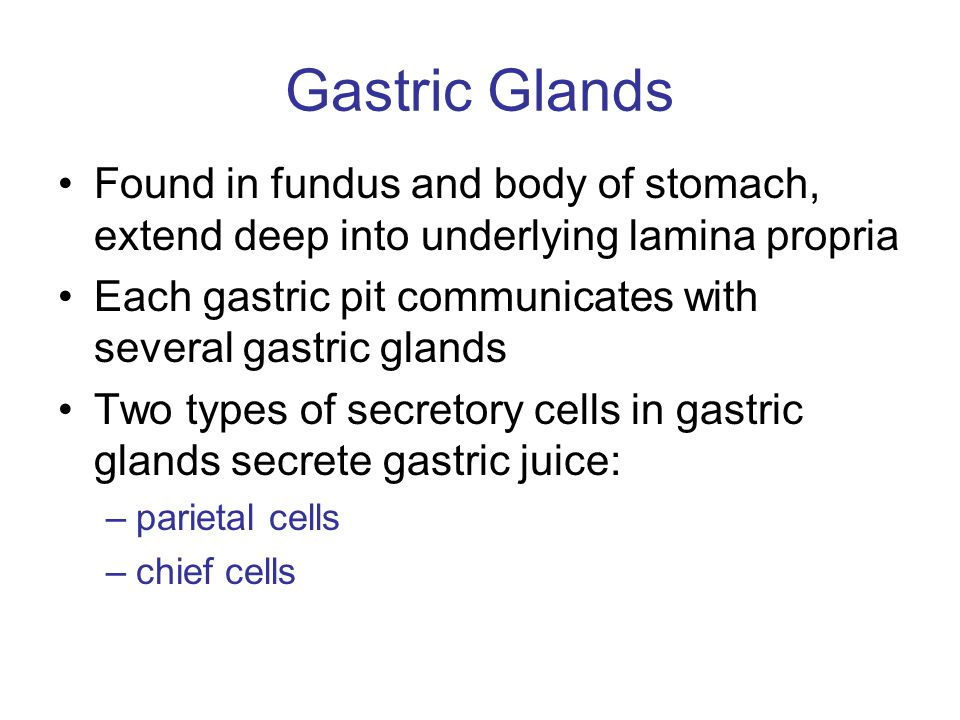 Gastric Glands Found in fundus and body of stomach, extend deep into underlying lamina propria Each gastric pit communicates with several gastric glan