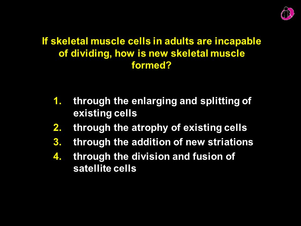 If skeletal muscle cells in adults are incapable of dividing, how is new skeletal muscle formed? 1.through the enlarging and splitting of existing cel