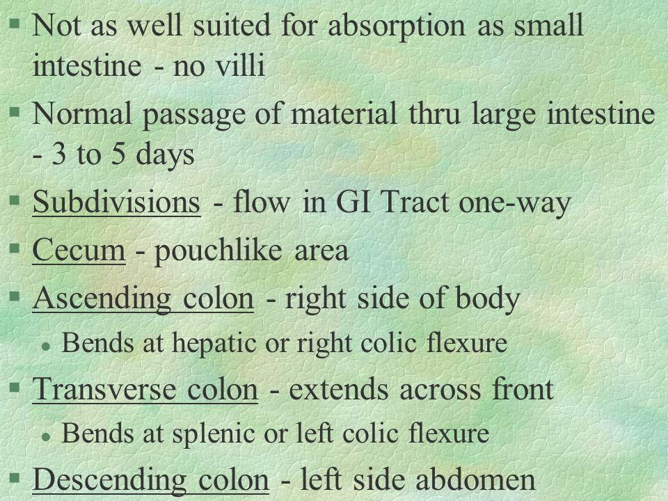 §Not as well suited for absorption as small intestine - no villi §Normal passage of material thru large intestine - 3 to 5 days §Subdivisions - flow in GI Tract one-way §Cecum - pouchlike area §Ascending colon - right side of body l Bends at hepatic or right colic flexure §Transverse colon - extends across front l Bends at splenic or left colic flexure §Descending colon - left side abdomen