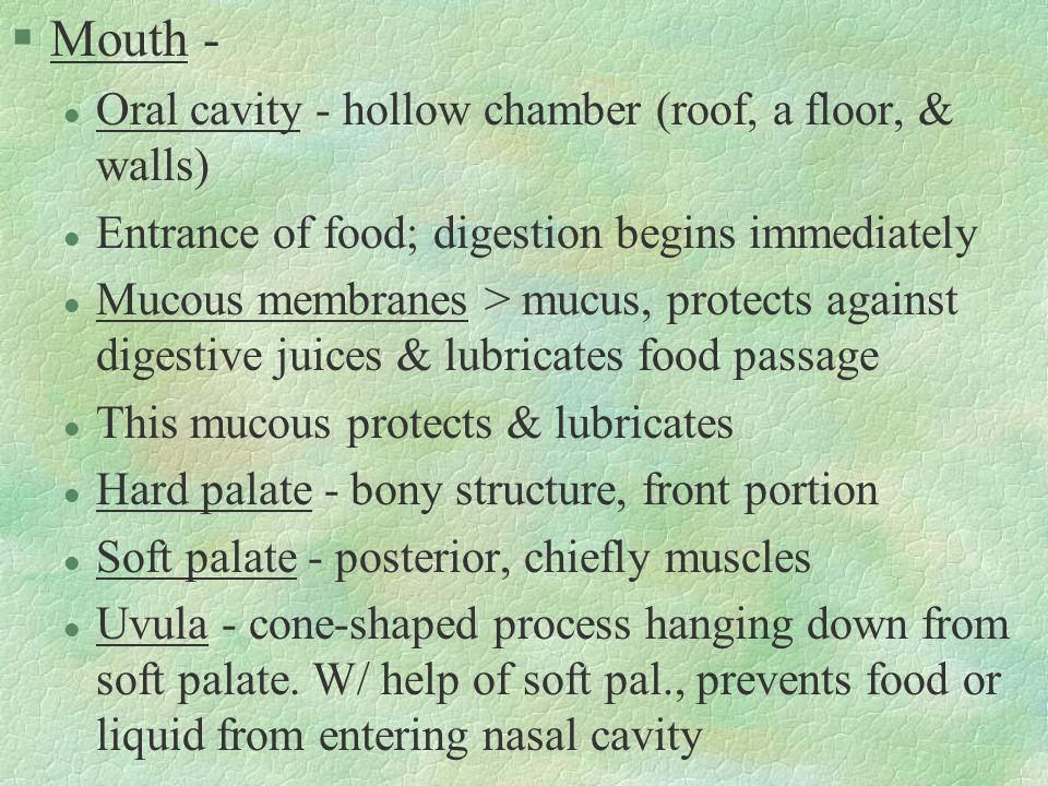 §Mouth - l Oral cavity - hollow chamber (roof, a floor, & walls) l Entrance of food; digestion begins immediately l Mucous membranes > mucus, protects against digestive juices & lubricates food passage l This mucous protects & lubricates l Hard palate - bony structure, front portion l Soft palate - posterior, chiefly muscles l Uvula - cone-shaped process hanging down from soft palate.