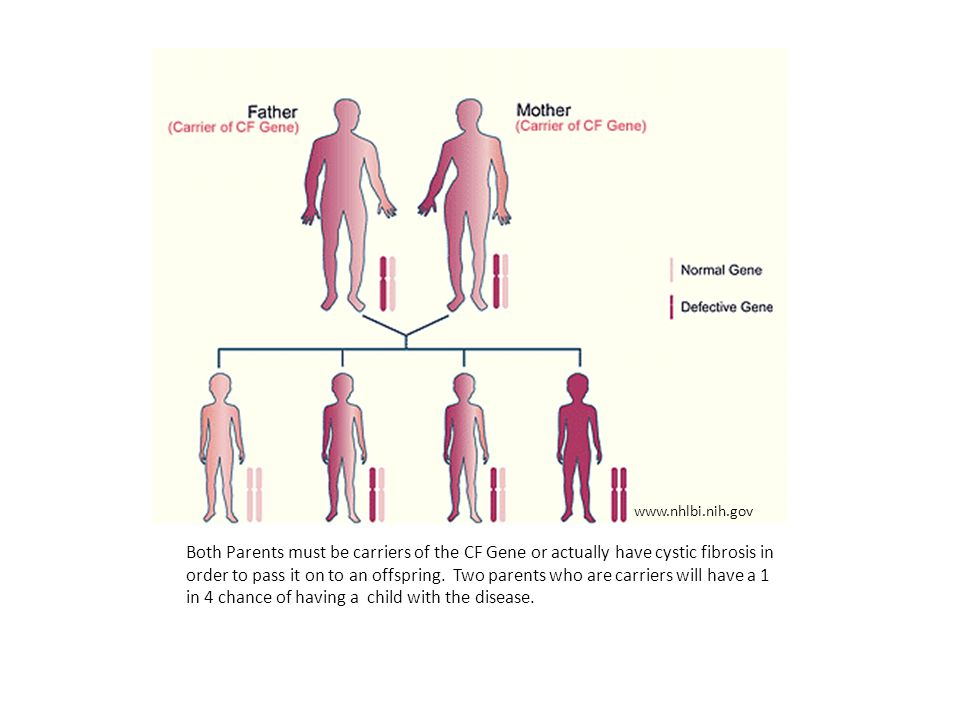 Both Parents must be carriers of the CF Gene or actually have cystic fibrosis in order to pass it on to an offspring.