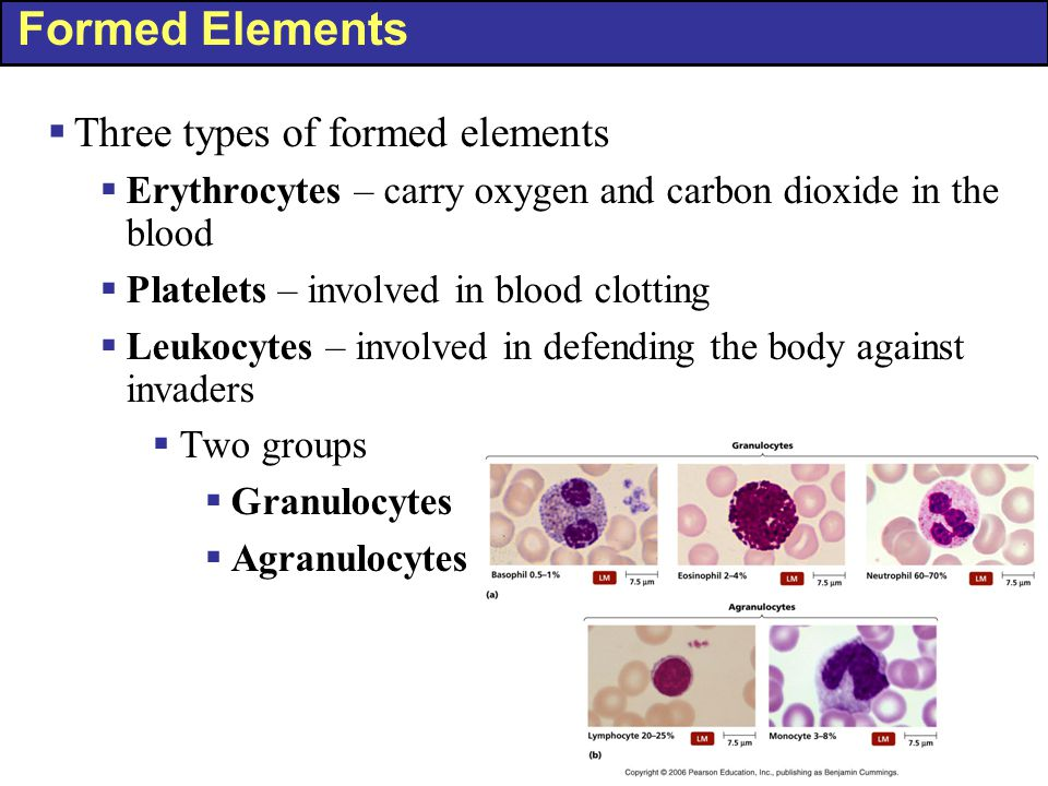 Formed Elements  Three types of formed elements  Erythrocytes – carry oxygen and carbon dioxide in the blood  Platelets – involved in blood clottin