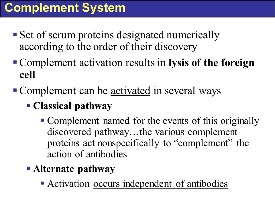 Complement System  Set of serum proteins designated numerically according to the order of their discovery  Complement activation results in lysis of