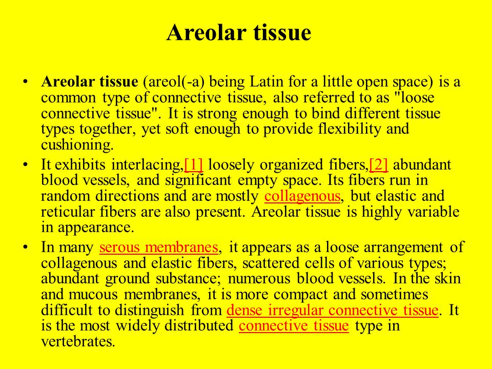 Areolar tissue (areol(-a) being Latin for a little open space) is a common type of connective tissue, also referred to as