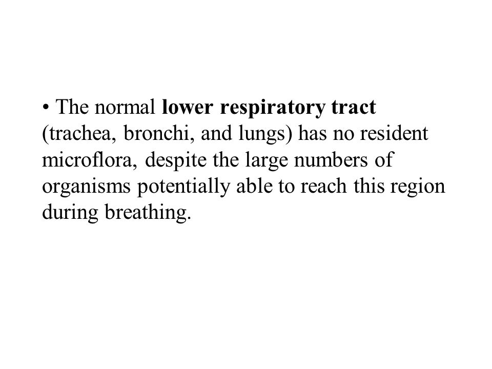 The normal lower respiratory tract (trachea, bronchi, and lungs) has no resident microflora, despite the large numbers of organisms potentially able t