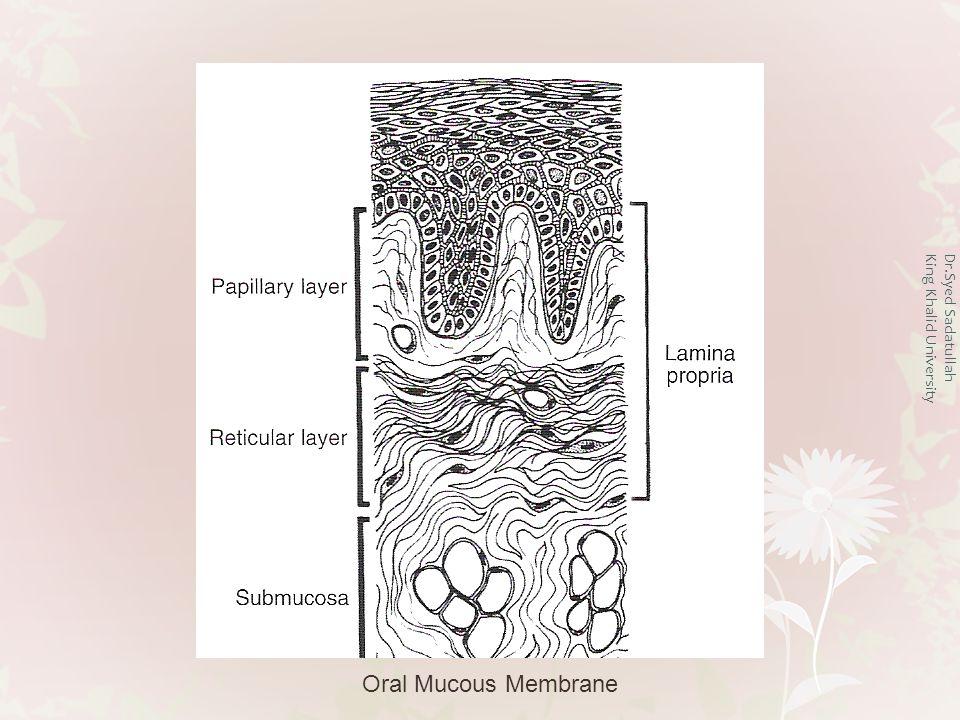 Dr.Syed Sadatullah King Khalid University Oral Mucous Membrane Epithelium Lamina Propria Submucosa Periosteum Bone