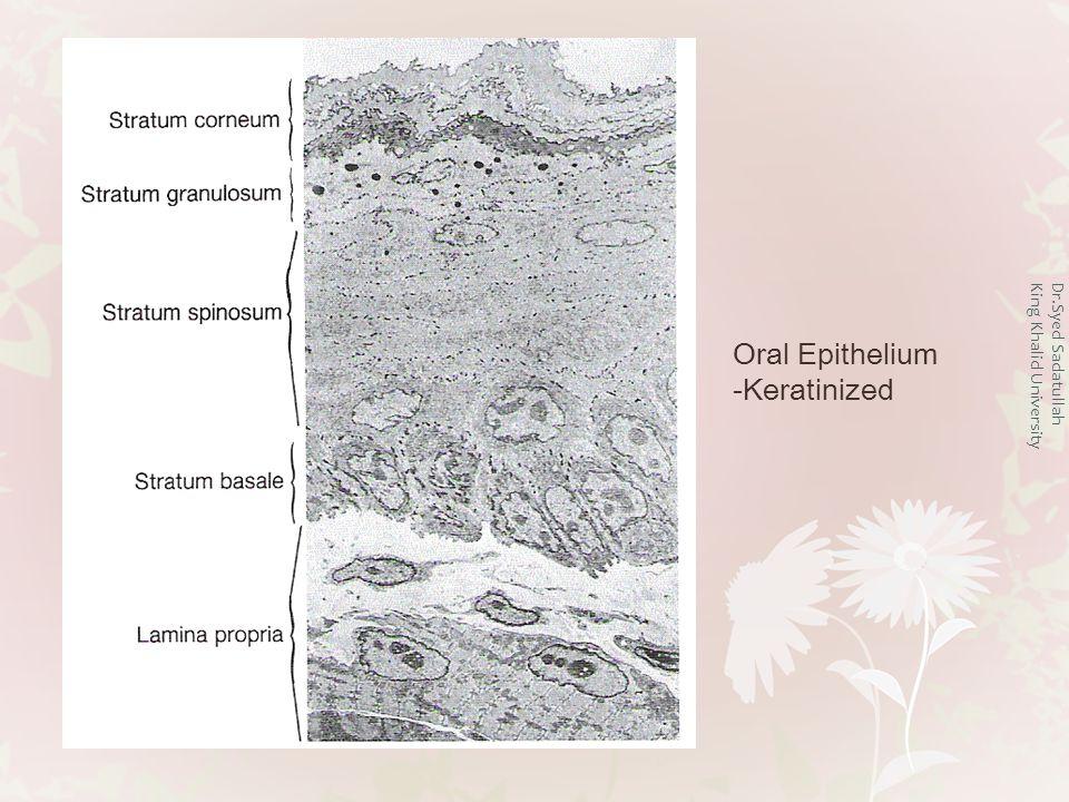 Dr.Syed Sadatullah King Khalid University Oral Epithelium -Keratinized