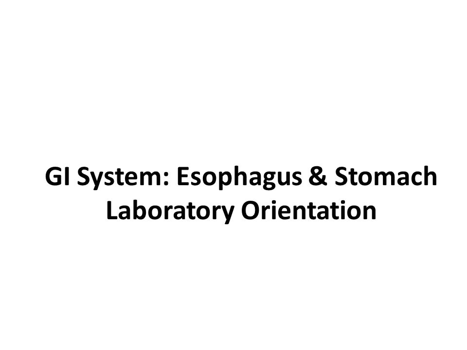 GI System: Esophagus & Stomach Laboratory Orientation