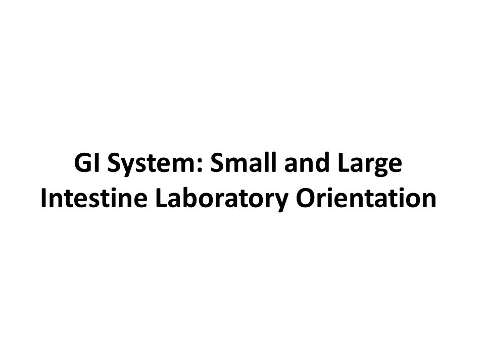 GI System: Small and Large Intestine Laboratory Orientation