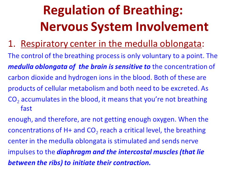 Regulation of Breathing: Nervous System Involvement 1.Respiratory center in the medulla oblongata: The control of the breathing process is only volunt