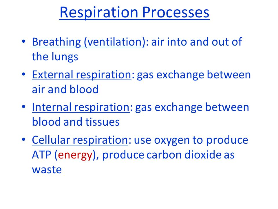 Breathing (ventilation): air into and out of the lungs External respiration: gas exchange between air and blood Internal respiration: gas exchange bet