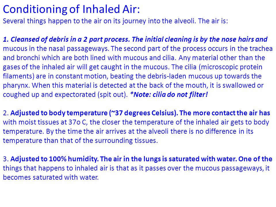 Conditioning of Inhaled Air: Several things happen to the air on its journey into the alveoli. The air is: 1. Cleansed of debris in a 2 part process.